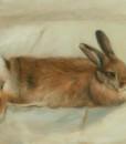 pet portrait by pet portrait artist Sonia Hale., pet portraits