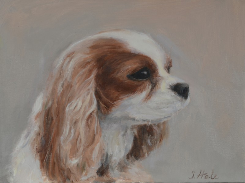 dog portrait, pet portrait, cavelier king charles's spaniel