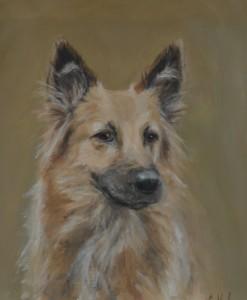 pet portrait, dog portrait, german shepherd